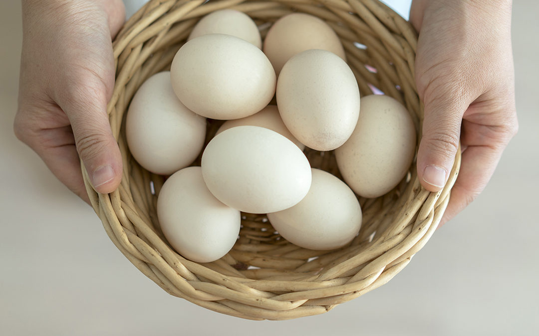 Are you putting all your marketing eggs in one basket?